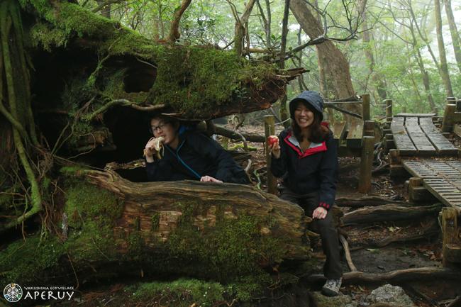 縄文杉へ、のんびりと。_f0252883_14031409.jpg