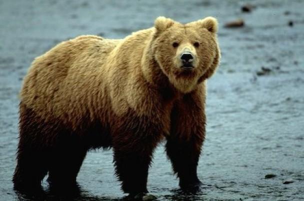 熊の読み方_a0163788_20302792.jpg