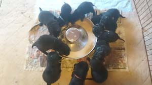 Happy Birthday OKIPUPPIES1KISEEEEI!!!_b0084194_13512536.jpg