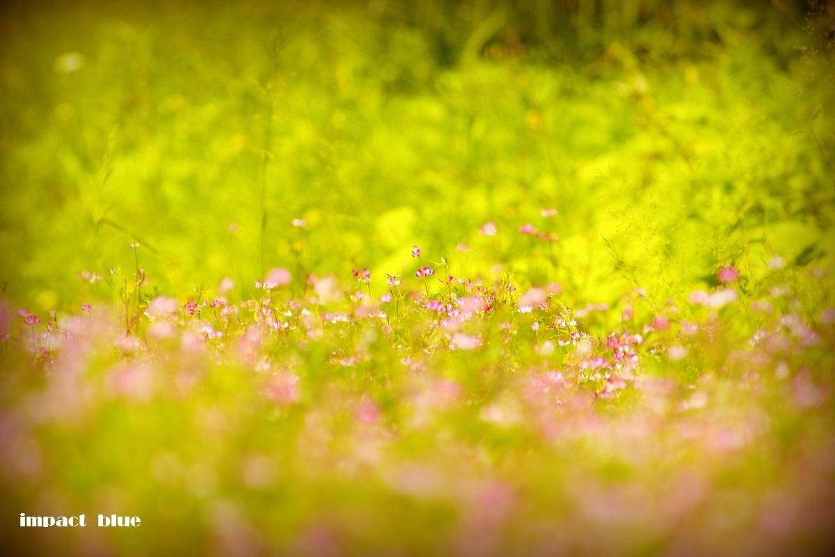 東京の野鳥公園にて♪_a0355908_18473566.jpg