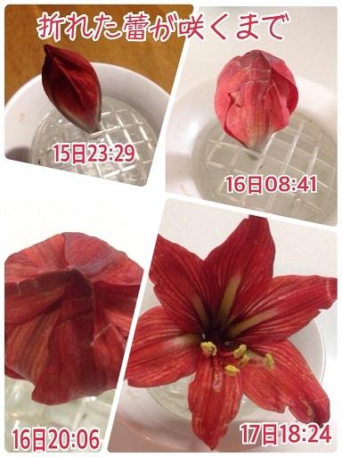 f0162908_21512596.jpg