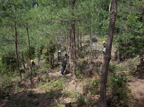【報告】5月14日(土)理想の森の松山整備_e0032609_19413473.jpg