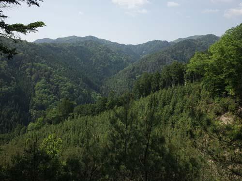 【報告】5月14日(土)理想の森の松山整備_e0032609_19444756.jpg