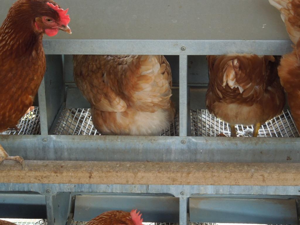 「卵と鶏銘柄についての考察 ③」 _a0120513_2225076.jpg