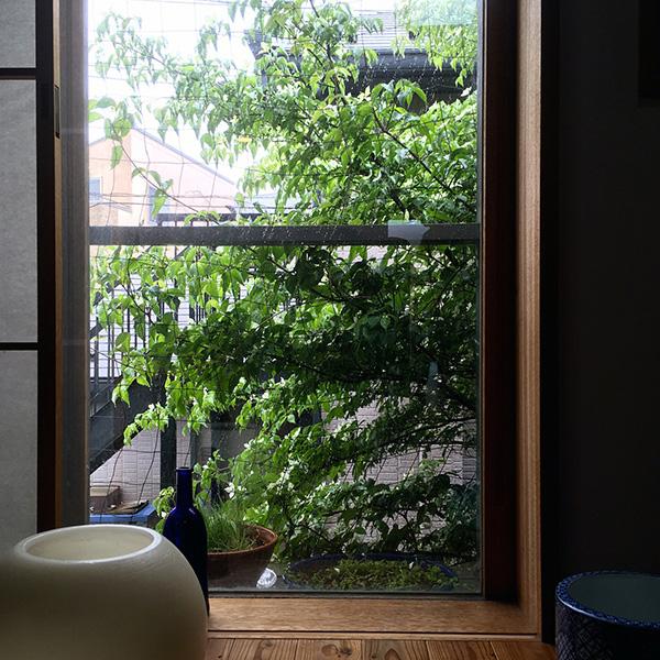 雨の日のヤマボウシ_b0038919_9114854.jpg