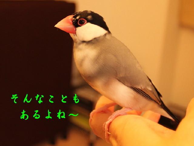 c0365734_20133318.jpg