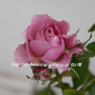 d0232840_15591268.jpg