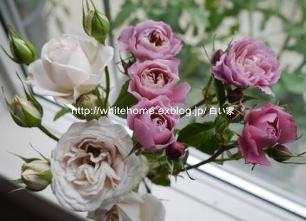 d0232840_15595246.jpg