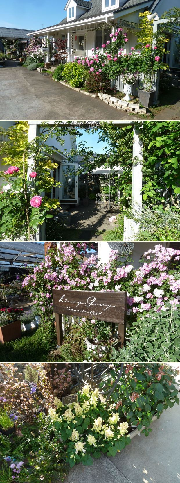 湘南「ルーシーグレイ」5月の庭☆_c0152341_23151340.jpg