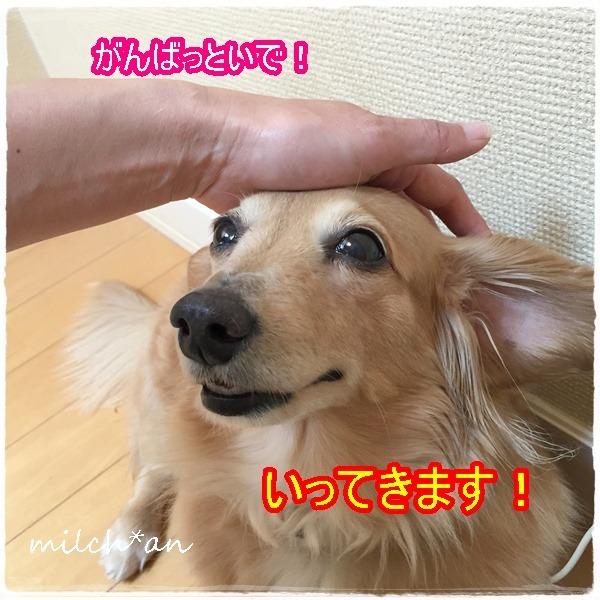 b0115642_2128313.jpg