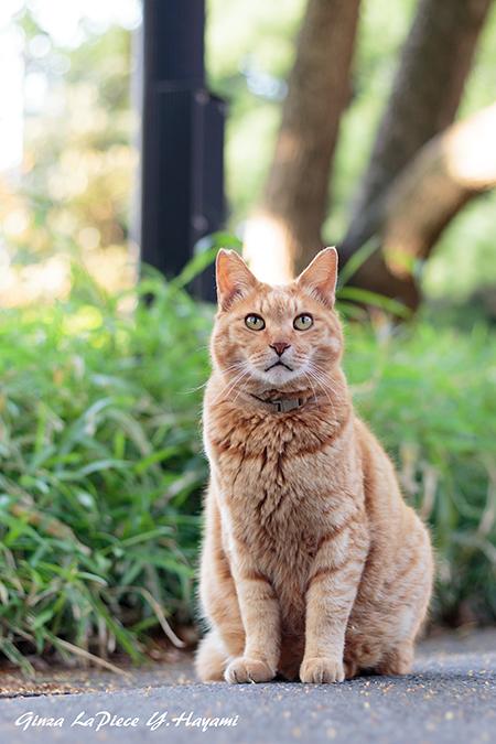 猫のいる風景 チャッピーの視線_b0133053_055321.jpg