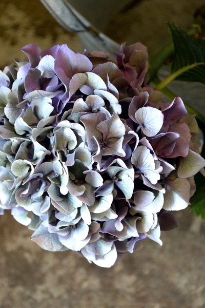 ご注文のお花たち。。。_a0229658_15332214.jpg