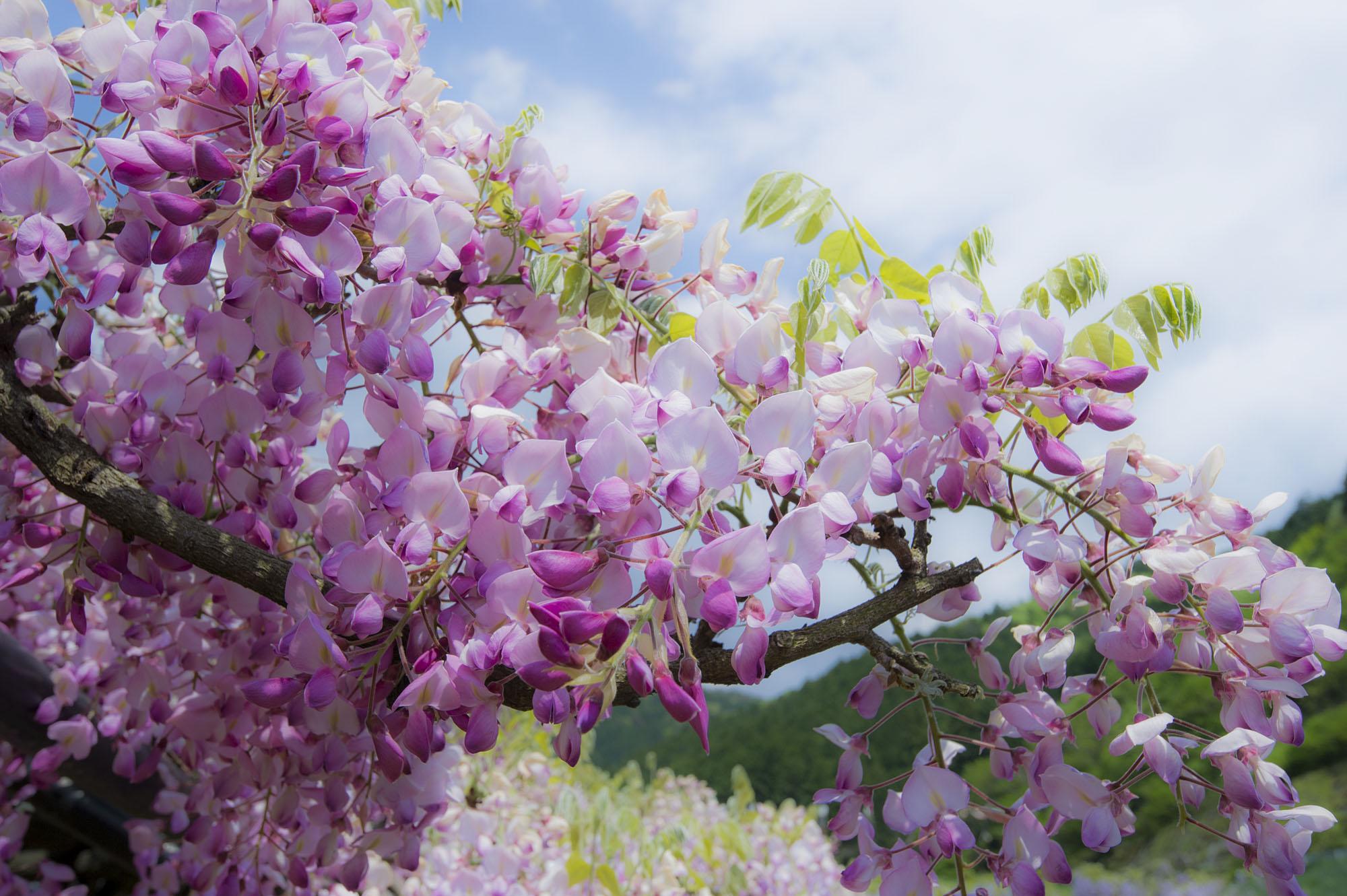 春の写真_f0145674_19224892.jpg