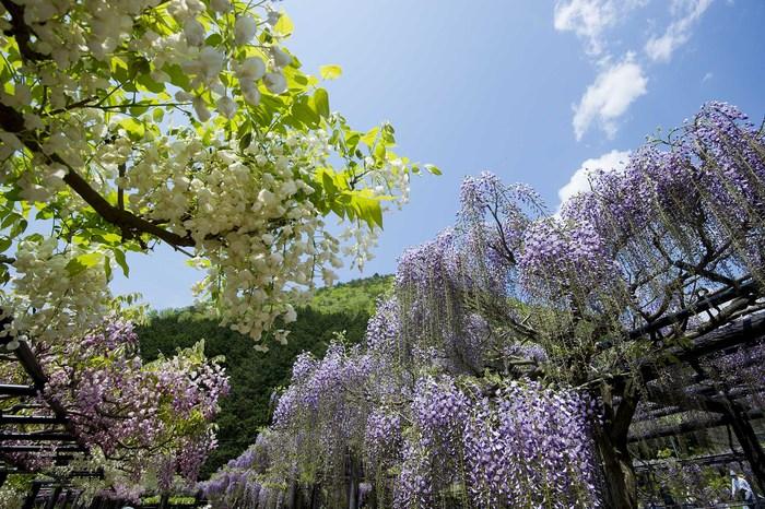 春の写真_f0145674_1924430.jpg