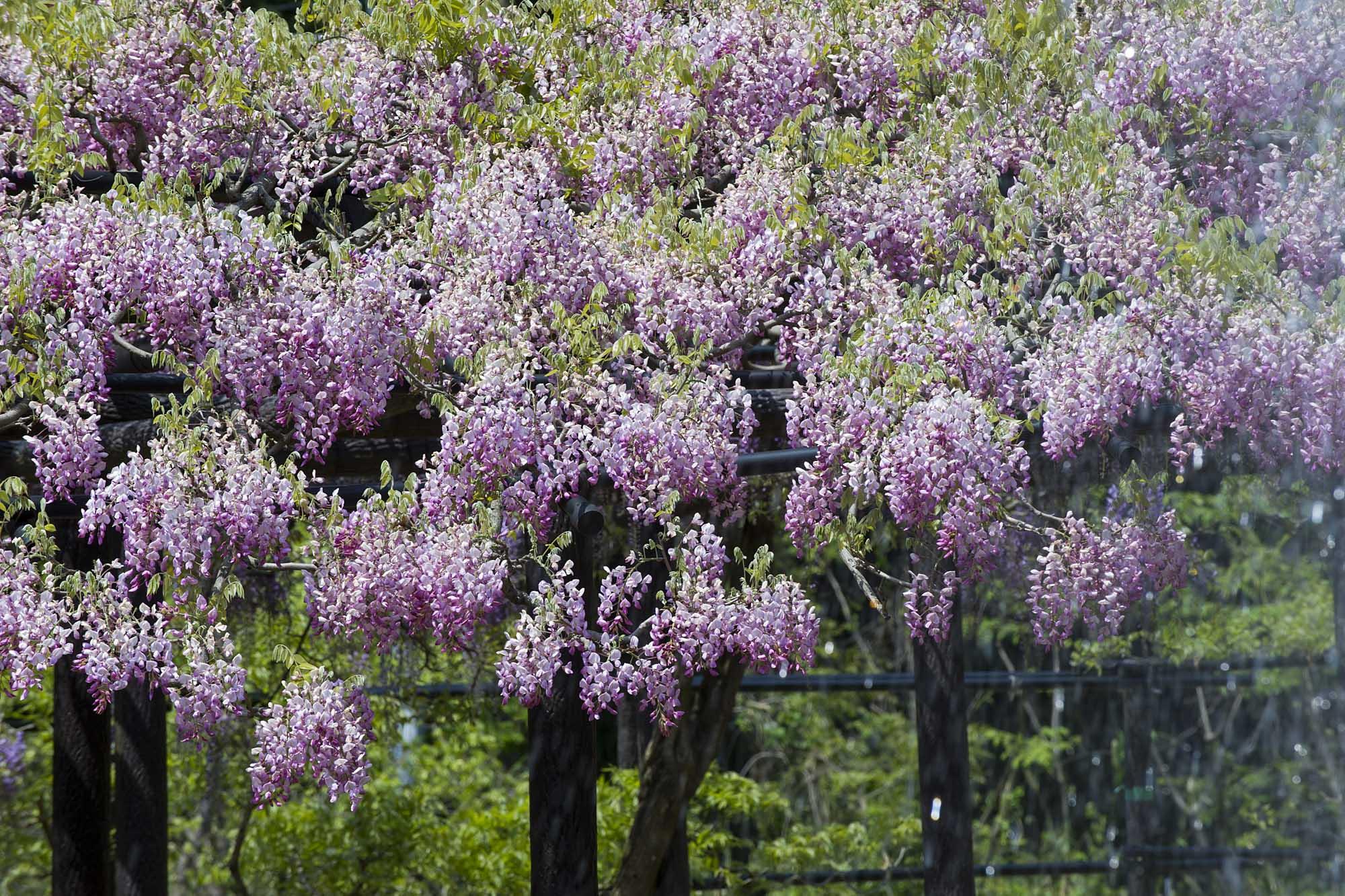 春の写真_f0145674_19295042.jpg