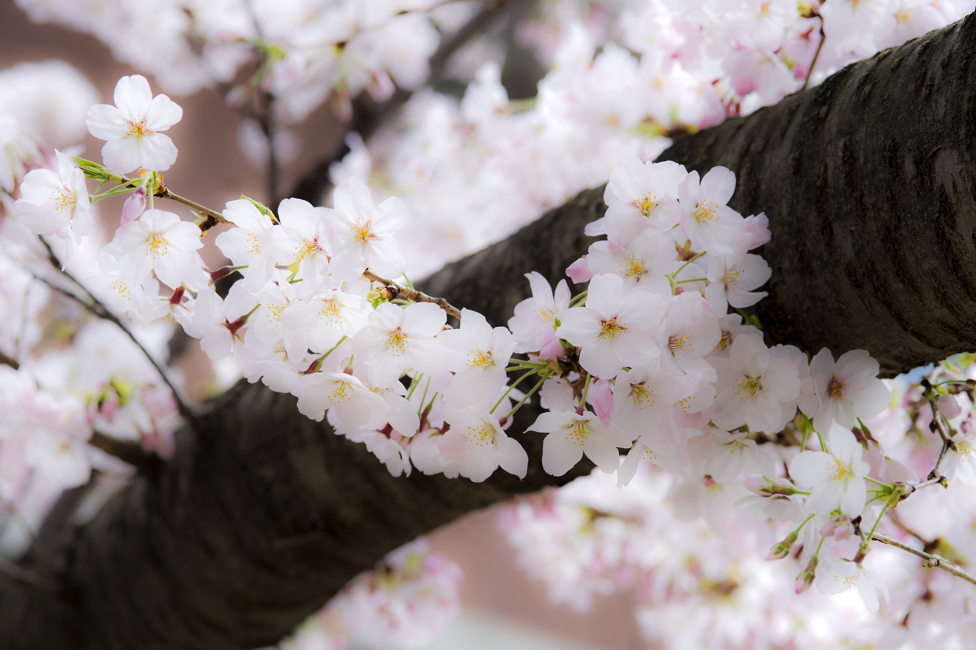 春の写真_f0145674_19565472.jpg