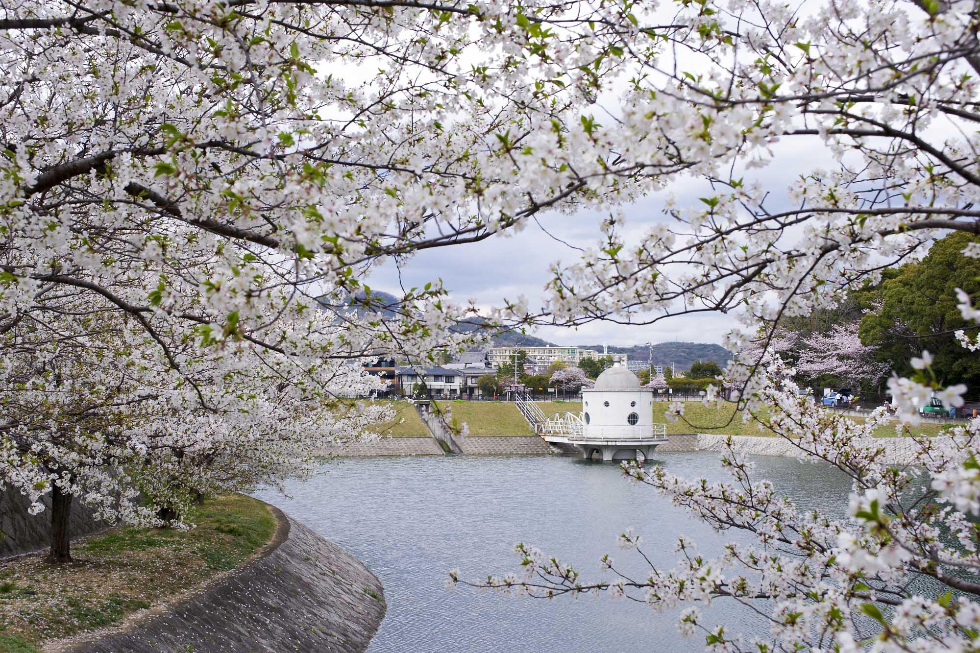 春の写真_f0145674_19574634.jpg