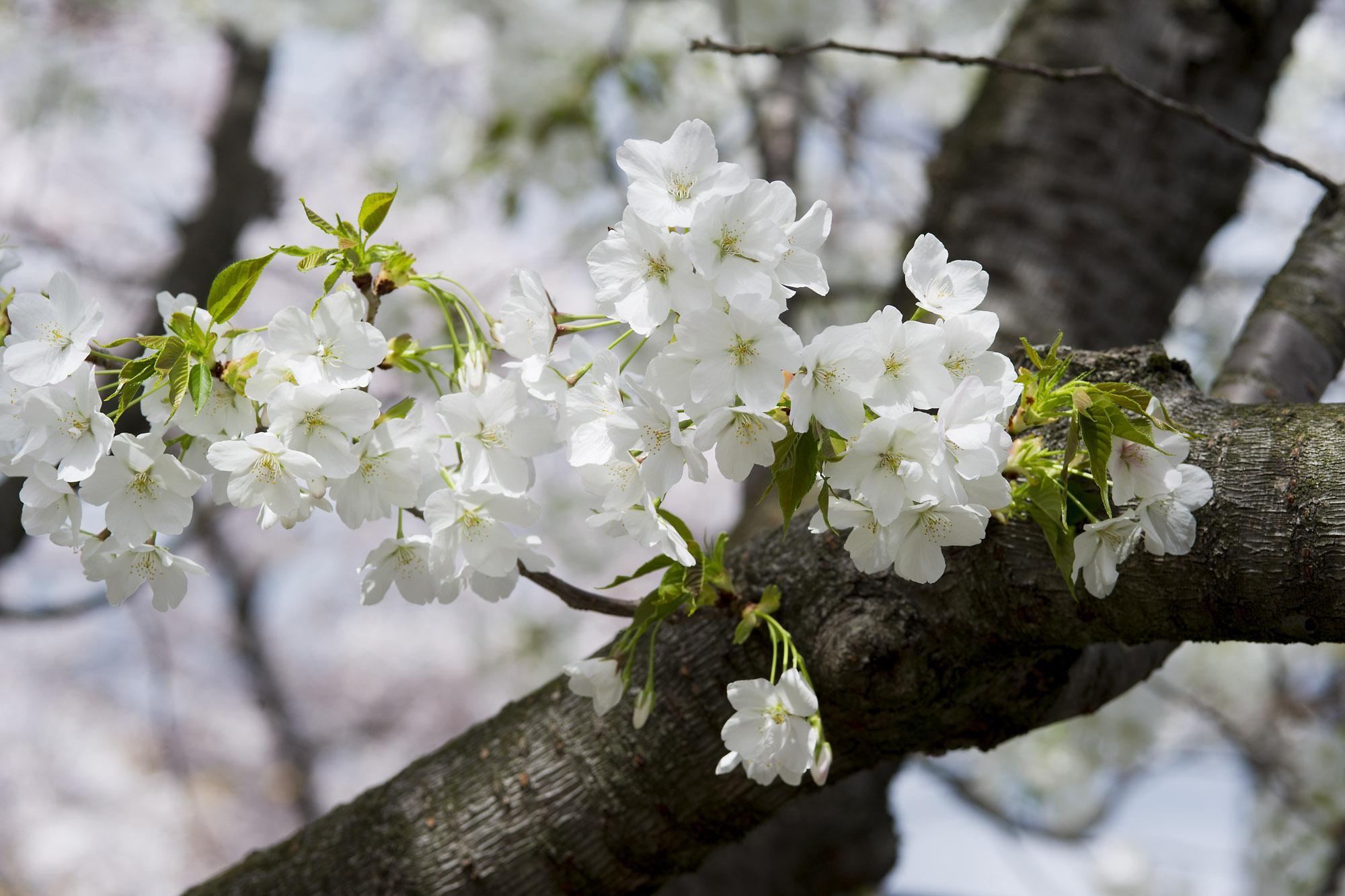 春の写真_f0145674_20151963.jpg