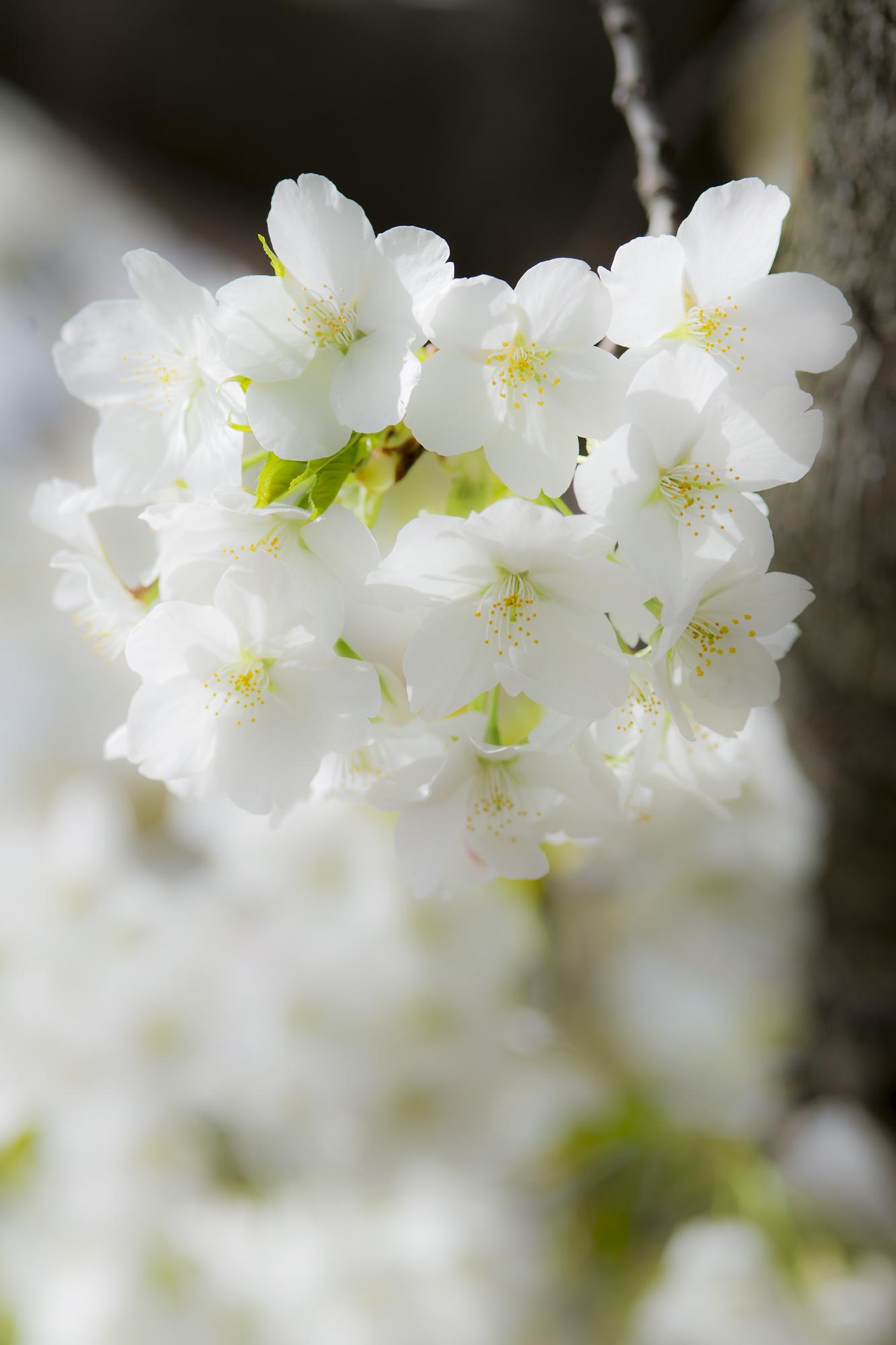 春の写真_f0145674_20154266.jpg