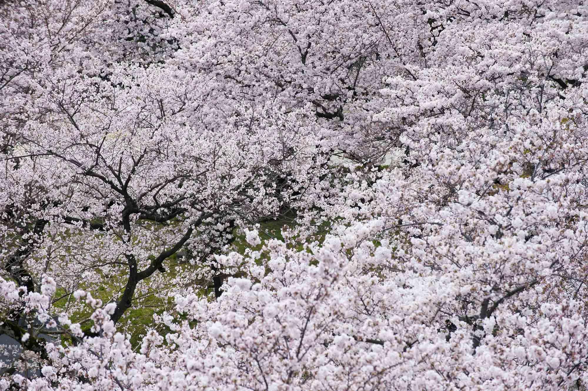 春の写真_f0145674_204099.jpg