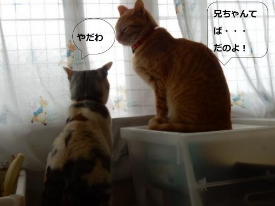 女子の噂話_e0355177_16490999.jpg