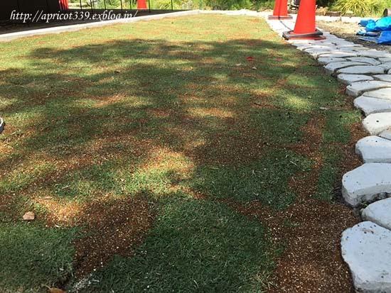 待望の芝生張り_c0293787_15002122.jpg