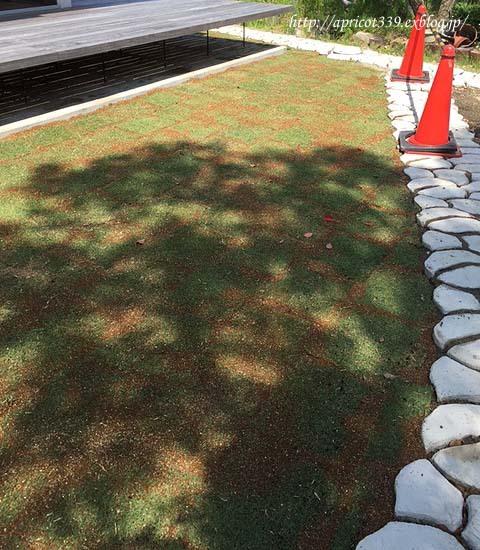 待望の芝生張り_c0293787_15050737.jpg