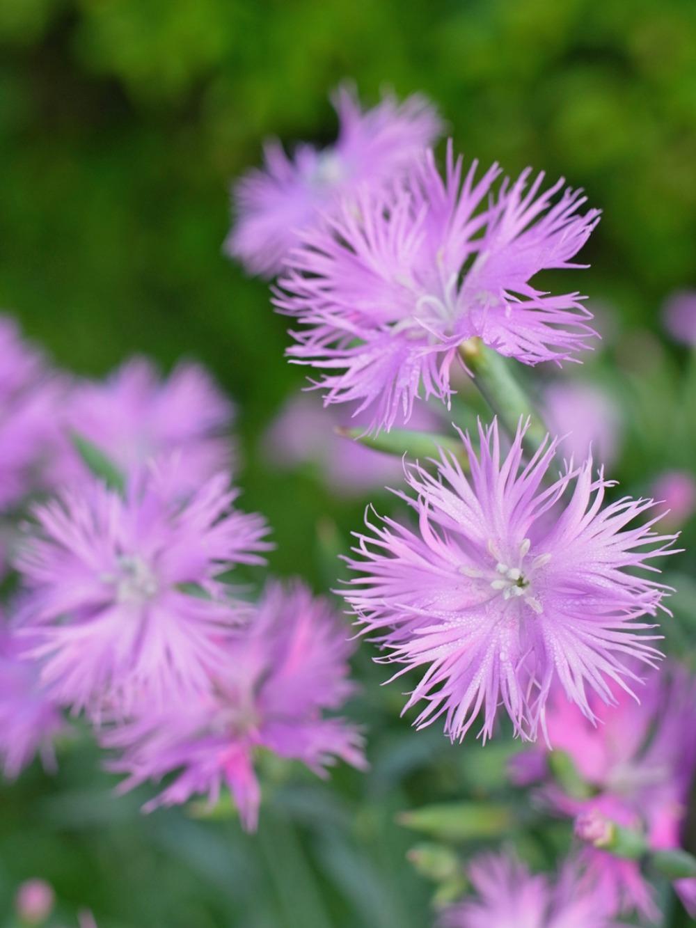 花々の季節 (^o^)_c0049299_22384652.jpg