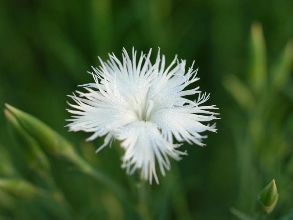 花々の季節 (^o^)_c0049299_22392893.jpg