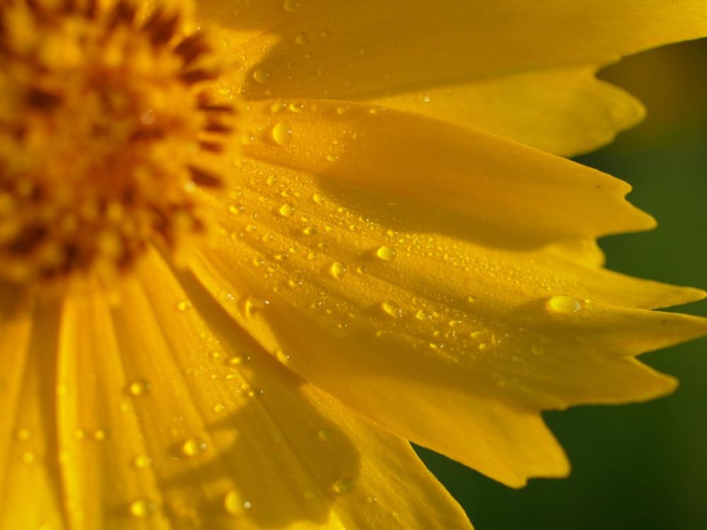 花々の季節 (^o^)_c0049299_22465572.jpg