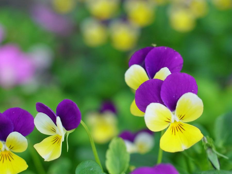 花々の季節 (^o^)_c0049299_2251950.jpg