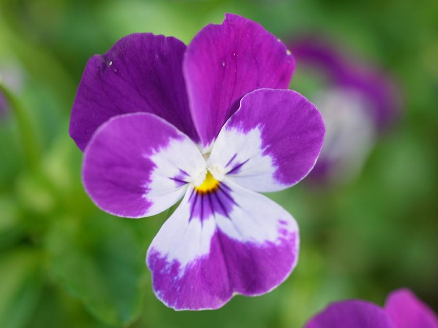 花々の季節 (^o^)_c0049299_22521429.jpg