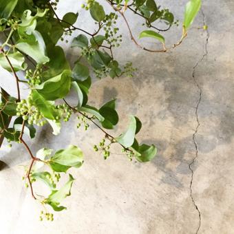 明日から展「緑の道、初夏の香り」が始まります_c0200002_22134381.jpg