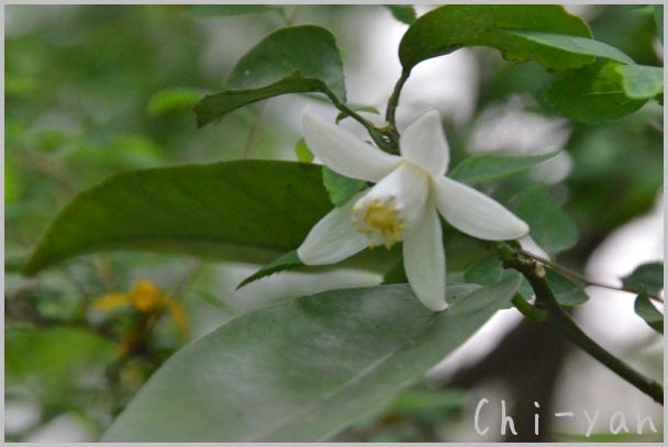 5月の匂い花_e0219011_20103265.jpg