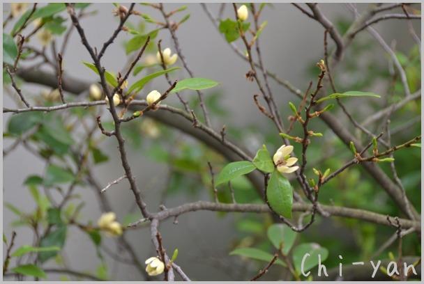 5月の匂い花_e0219011_20105644.jpg