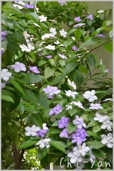5月の匂い花_e0219011_20112026.jpg
