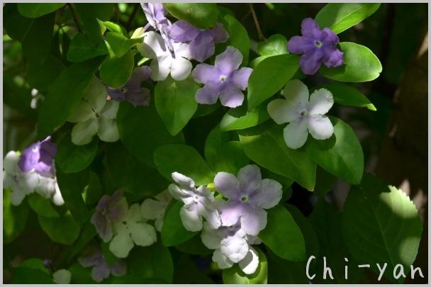 5月の匂い花_e0219011_2011691.jpg