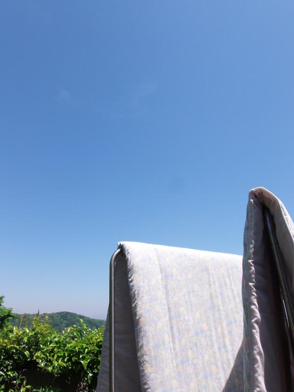 暑くなってきた「畑」_a0125419_11200739.jpg
