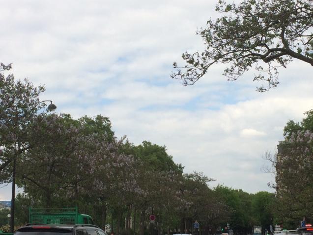 パリの花散歩_d0337937_17224802.jpg