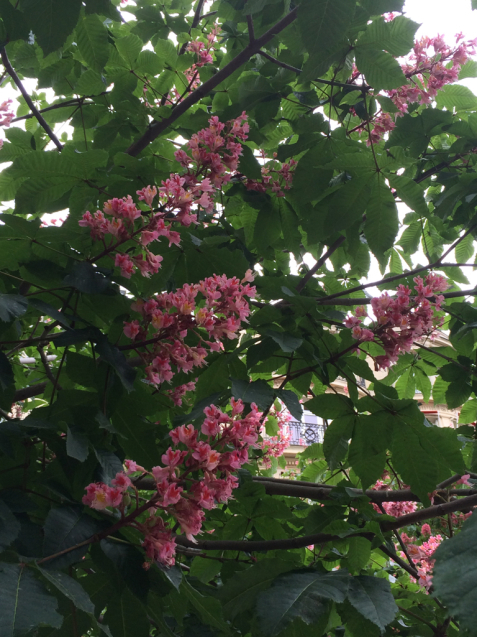 パリの花散歩_d0337937_17224877.jpg