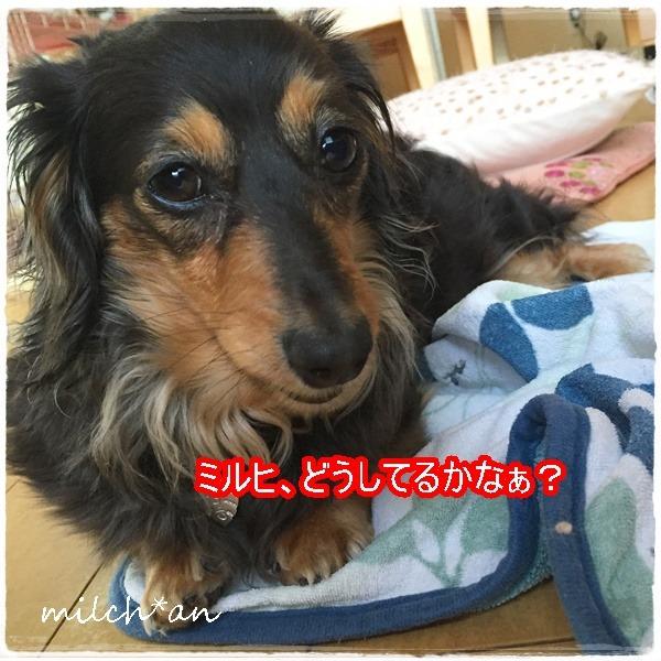 b0115642_61212.jpg