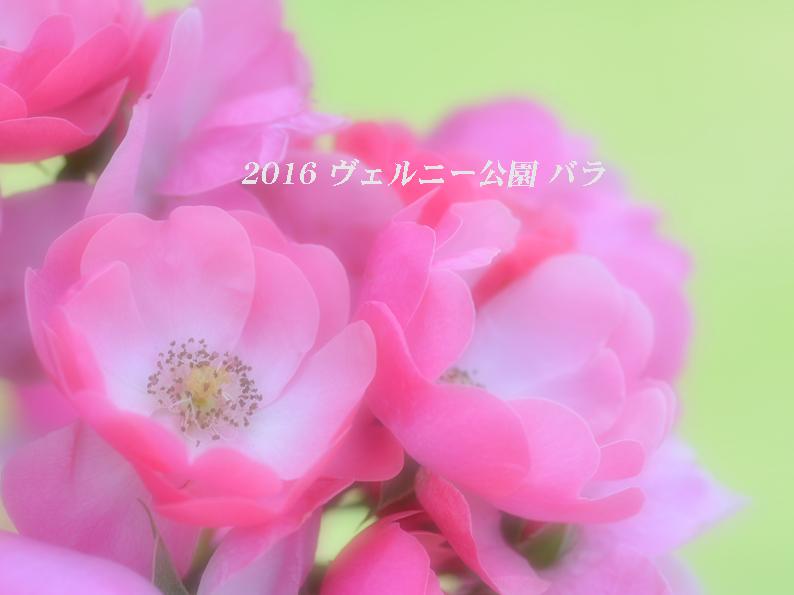 d0251161_15444669.jpg