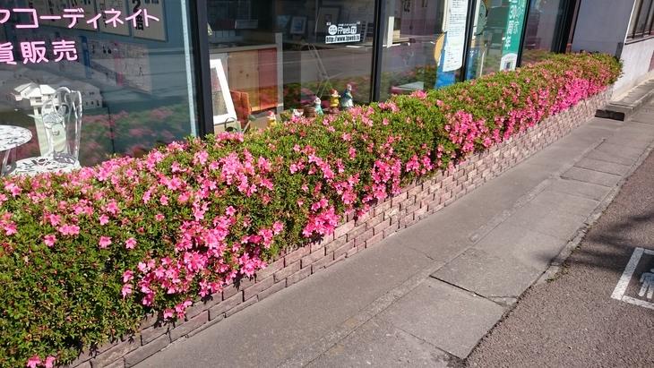 皐月、5月、花が咲いた_c0066693_16313634.jpg