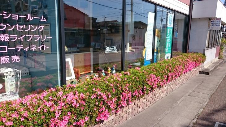 皐月、5月、花が咲いた_c0066693_16321033.jpg