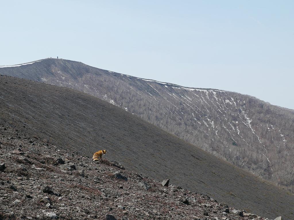 樽前山、5月18日-速報版-_f0138096_1651170.jpg