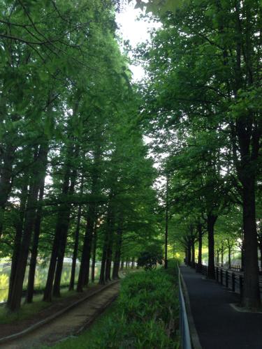 珍しく朝の散歩…👣_c0162404_11553210.jpg