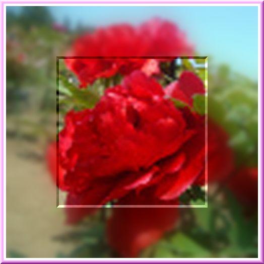 f0132006_13501459.jpg