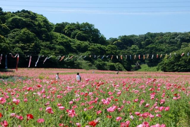 【くりはま花の国】横須賀散策 part 1_f0348831_23345063.jpg