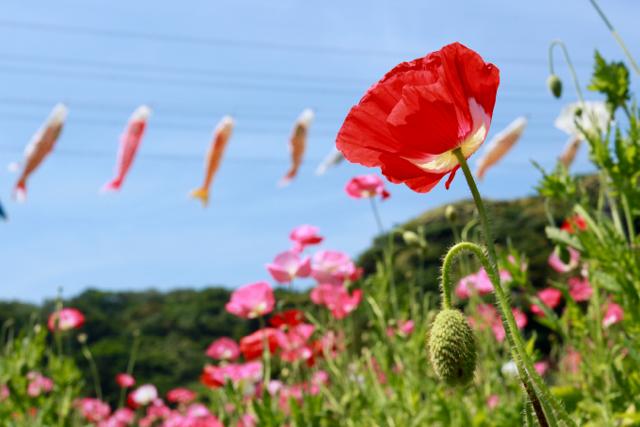 【くりはま花の国】横須賀散策 part 1_f0348831_23345182.jpg