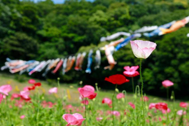 【くりはま花の国】横須賀散策 part 1_f0348831_23361750.jpg